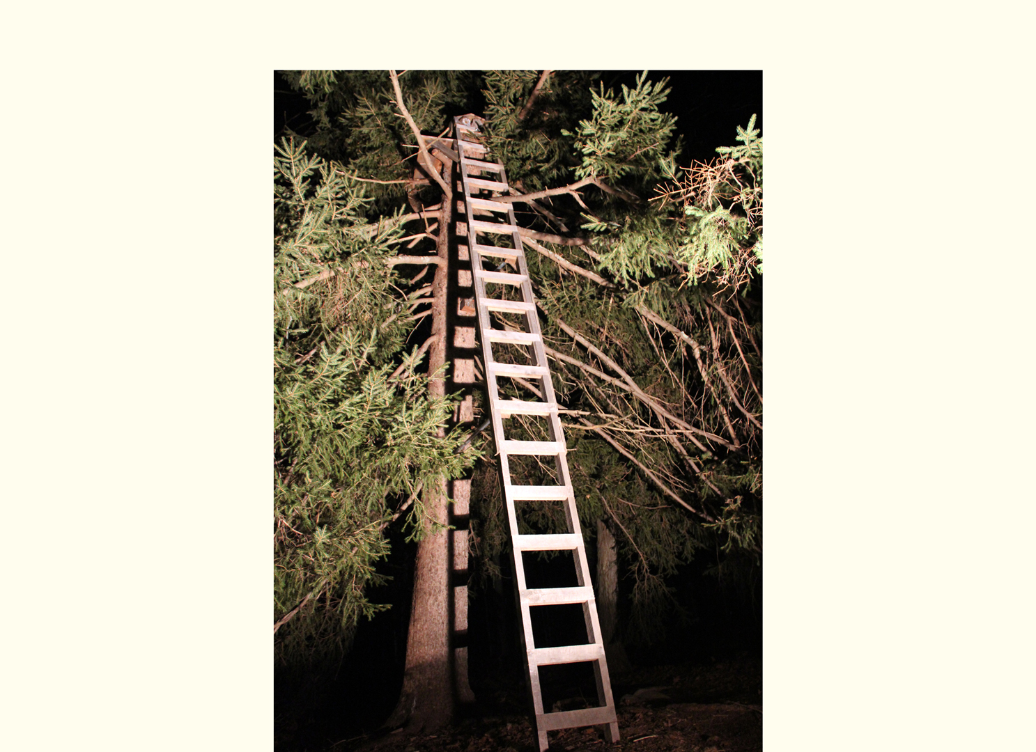 Tree Ladder, 2012